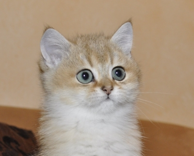 Bruce Of Mysterys Dream